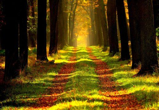 forest on gap year adventure